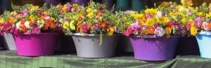 flowers-508204__180